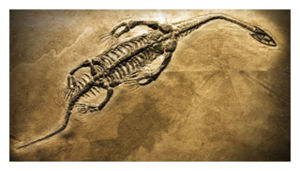 fossilized dinosaur