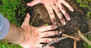 Hands in dirt