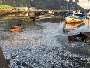 Mass fish kill in Queule river, Chile