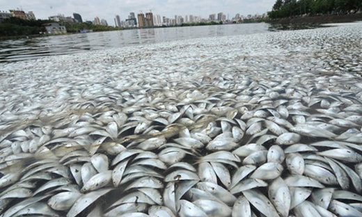 Mass fish kill in China