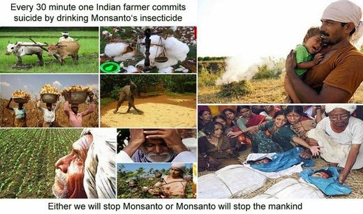 Indian farmers suicide Monsanto