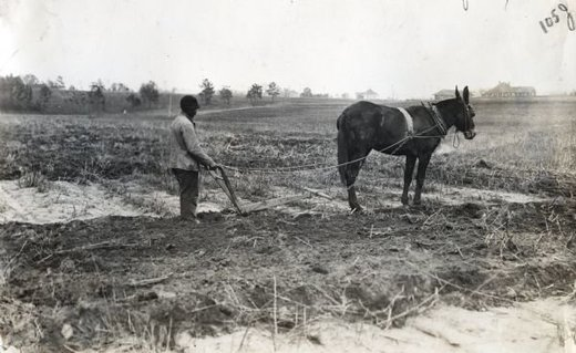 man with plow and mule toiling