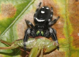 Spider eat astronomical amount food