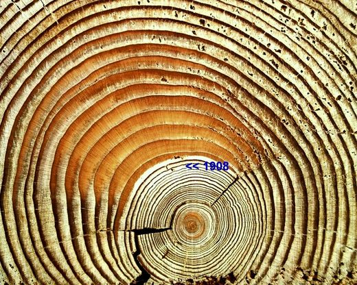 Figure 166: Tunguska tree ring enlargement