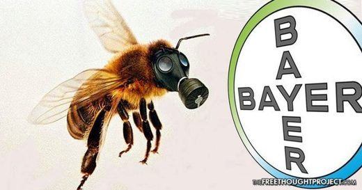 bayer bees