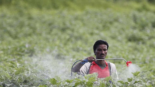 India pesticide spraying