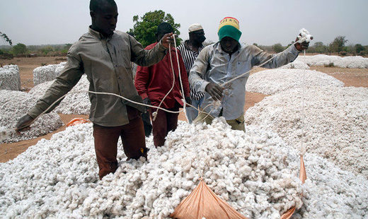 Cotton growers in Burkina Faso