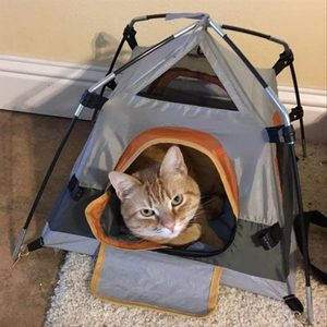 Cat in mini-tent