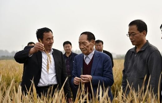 Chinese scientist successfully grows rice with sea water