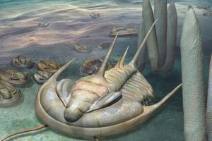 When Trilobites Ruled the World