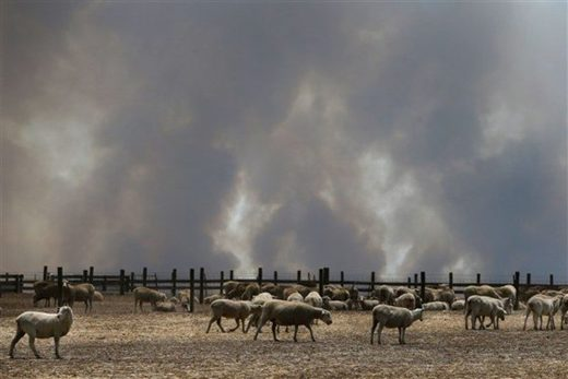 A large plume of smoke is seen over a sheep property in the Parndana region on Kangaroo Island, Australia