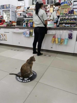 Stand here cat